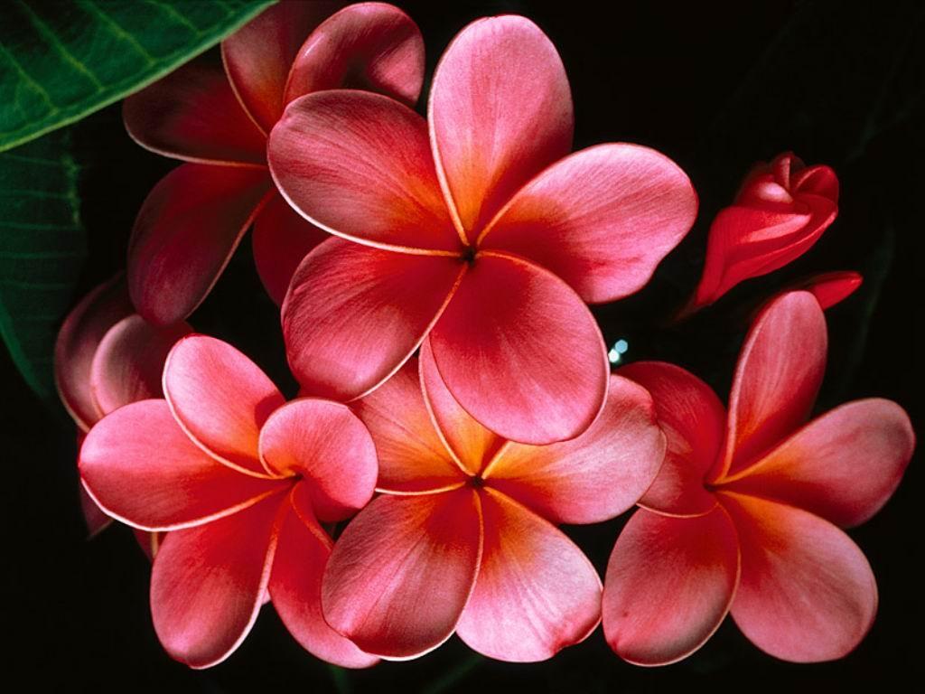 fondos-de-pantalla-flores-2 (1)