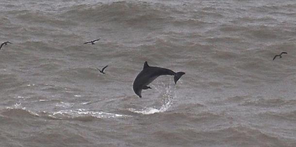 Delfín del distrito de San Miguel